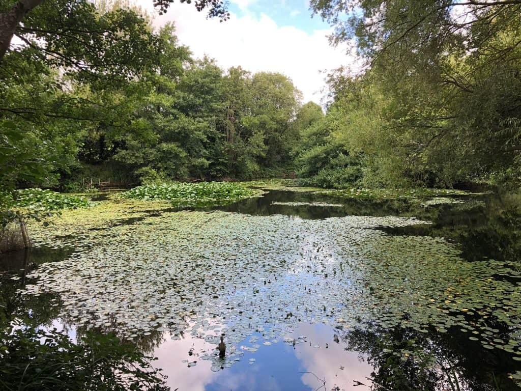 Abbeycare_Hygrove_Gloucester_Lake